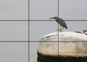 rule of thirds photography tips
