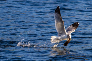 High shutter speed image of bird in flight
